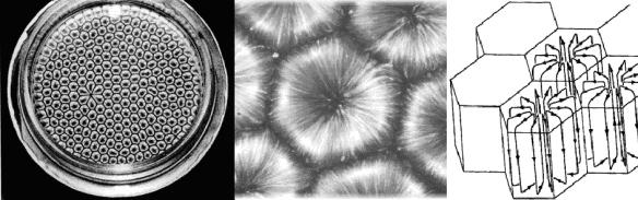 Benard Cells